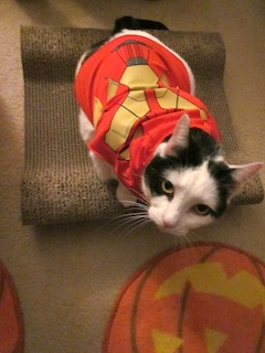 More Halloween costumes for pets on display at our Family Pet Fashion Show page. & Merovence: Family Pet ((Halloween)) Fashion Show!